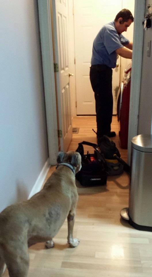 Repair with Dog